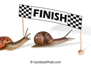 Funny snails arriving at the finish of a race