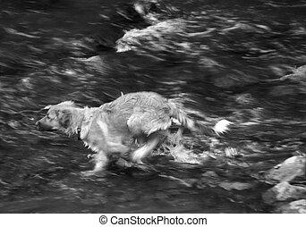 Racing Through Water