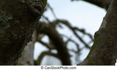 Rack focus between branches of a gnarly tree - Rack focus...