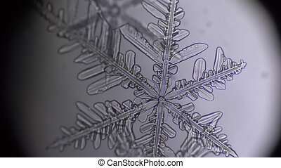 rack focus of snowflake in microscope.