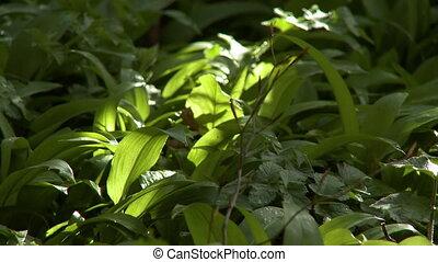 Rack focus to rich dark vegetation - Rack focus to a thick...
