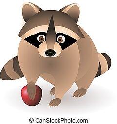 racoon - raccoon