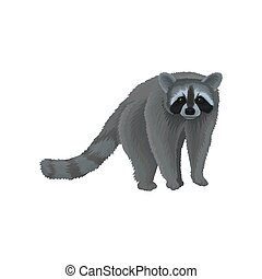 Racoon wild northern forest animal vector Illustration on a...