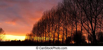 rad, av, träd, hos, solnedgång