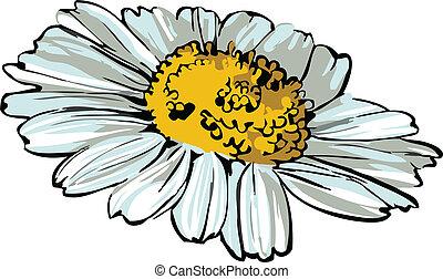 rad, gänseblumen