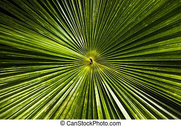Radial palm tree leaves backdrop