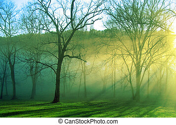radiant - rays of sun shine through a forest