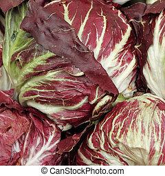 radicchio di Chioggia , kind of red leaf chicory, typical...