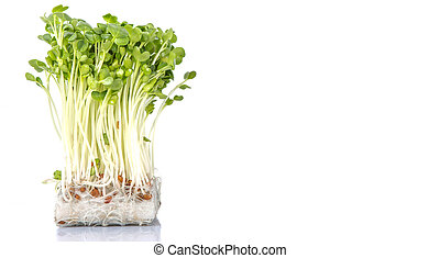 radijsje, groentes, spruit