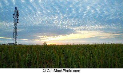 Radio Antenna over Paddy field during Sunrise