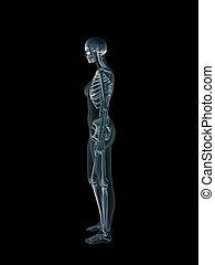 radiografía, cuerpo, radiografía, hembra, humano