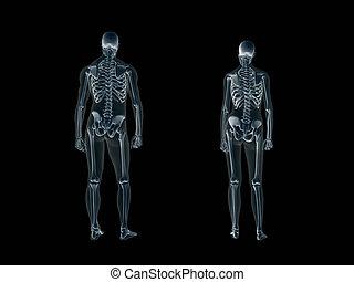 radiografía, cuerpo, radiografía, hombre, woman., humano
