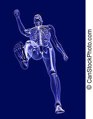radiografía, debajo, hombre