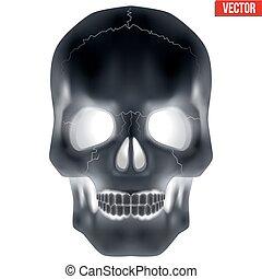 radiografía, humano, cráneo