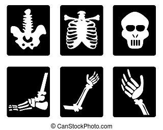 radiografía, iconos