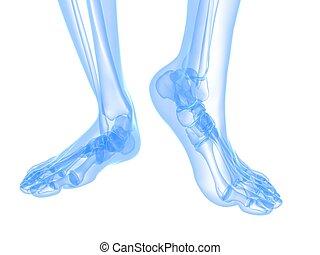 radiografía, pie, ilustración