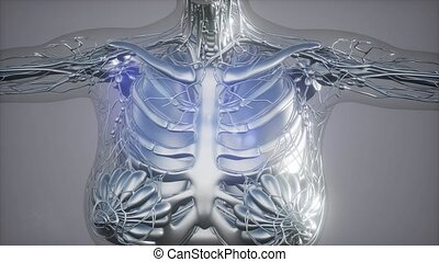 radiographic scan of human skeletal bones