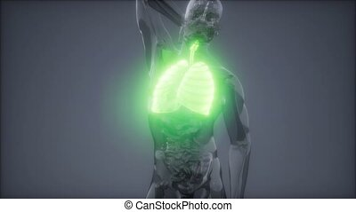 radiologie, humain, poumons, examen