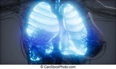 radiologie, poumons, humain, examen