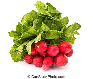 radish bunch isolated on white background