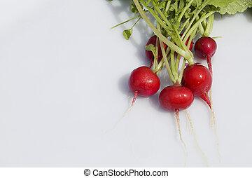 Radish bunch on white background. Fresh radish root bundle, ...