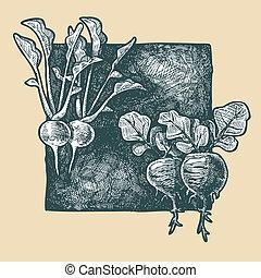 radish - Vector illustration of a radish stylized as...
