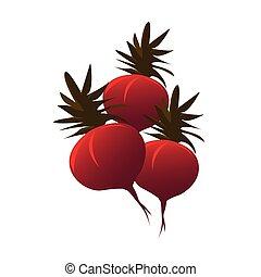 radish color illustration design