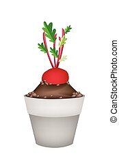 Radish Or Beet in Ceramic Flower Pots