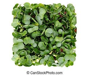 radish, sprouts