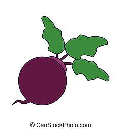Radish vegetable food vector illustration graphic design