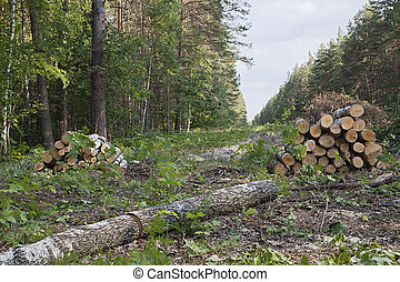radura, foresta