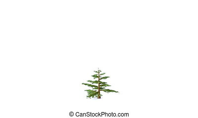 radvormigen, groeiende, boompje, kerstmis, speelgoed
