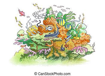 rafa, koral