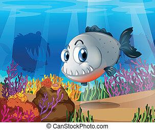 rafy, koral, piranha