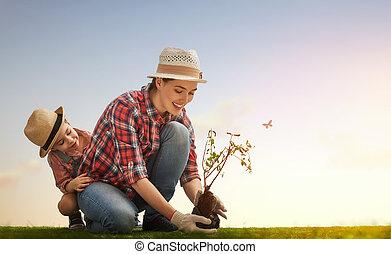 ragazza, alberello, albero, pianta