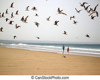 ragazzi, inseguire, uccelli