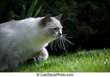 A young cat with long whiskers is tracking prey in green grass.