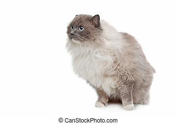 photographies de stock de blanc yeux chat jaune eyes fond blanc chat jaune csp4763321. Black Bedroom Furniture Sets. Home Design Ideas