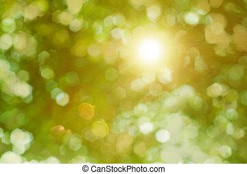 raggi sole, attraverso, fogliame, lucente