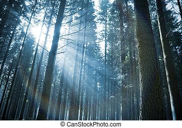 raggi sole, attraverso, foresta