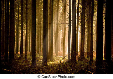 raggi sole, riscaldare, attraverso, foresta