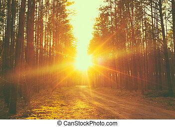 raggi sole, tramonto, foresta, strada