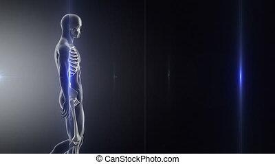 raggi x, camminata dentro, rallentato