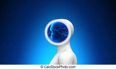raggi x medici, scansione, -, cervello