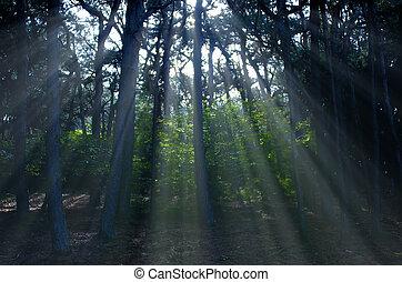 raggio luce, in, il, albero