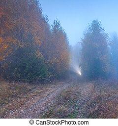 raggio luce, in, il, nebbioso, foresta autunno