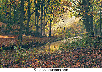 raggio luce, in, nebbioso, autunno, forest.
