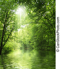 raggio sole, in, foresta verde, con, acqua