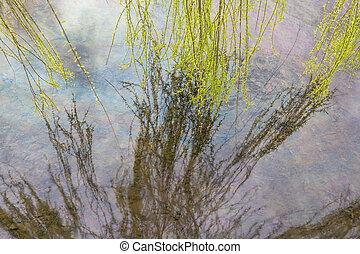raggiungimento, foglie, albero, superficie, acqua, riflettere