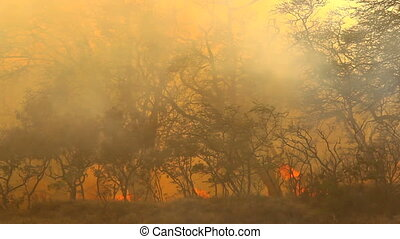 Raging forest fire - A raging forest fire consuming dried...